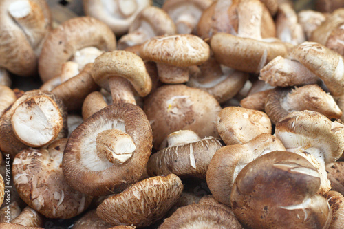 Fresh shiitake mushroom on background