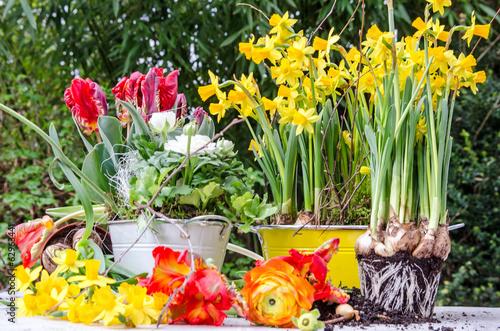 canvas print picture Gartenarbeit im Frühling: Einpflanzen von Frühlingsblumen :)