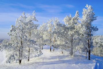Evening winter landscape
