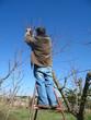 Trabajos de poda en un huerto