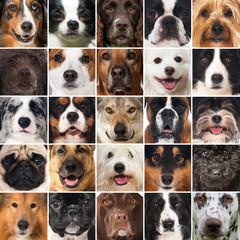 Hundeschnauzen - Collage