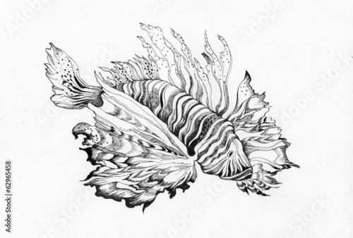 Unusual beautiful fish drawing on white