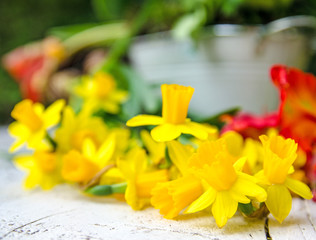Frühling: zart-duftende Osterglocken :)