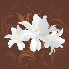 White flowers on the brown ornamental background