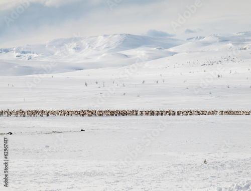 winter mountain landscape with reindeer