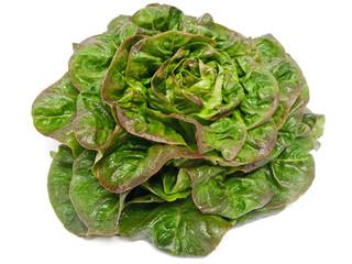 Rougette-Blattsalat