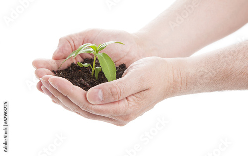 green seedling in male hands, isolated on a white background