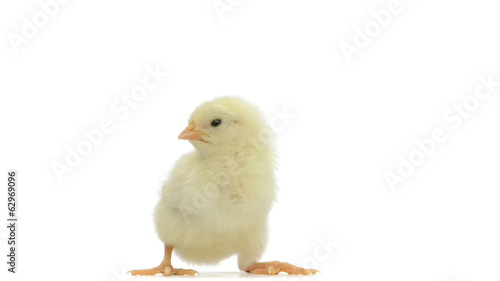 Chick standing and falling asleep
