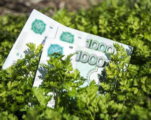 деньги лежащие в траве