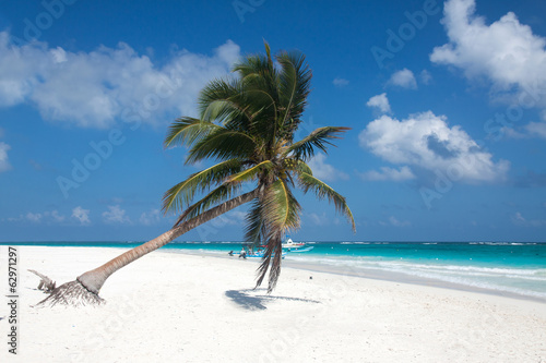 Palm tree in the Tulum beach, Mexico