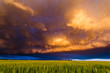 Leinwanddruck Bild - Stormy sunset in the plains