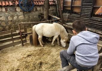 Atı izleyen çocuk