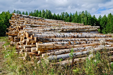 Trestle harvested wood