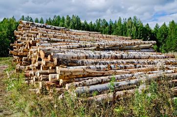 Trestle harvested wood