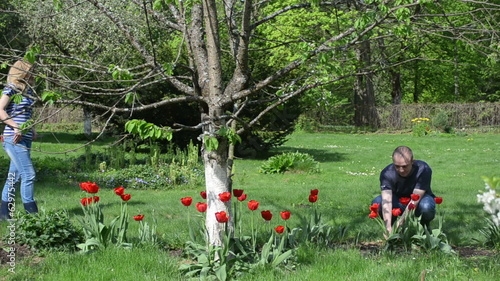 boyfriend pick tulip flowers give girlfriend spring garden