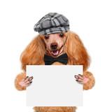 Placeholder banner dog poster