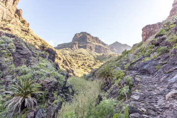 Masca valley, in Tenerife