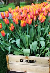 Tulip box in Keukenhof garden, Netherlands