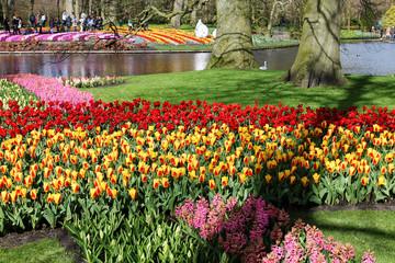 Colorful Keukenhof garden on a sunny day, Netherlands.