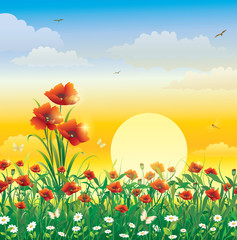 Field with flowers on a background of solar dawn