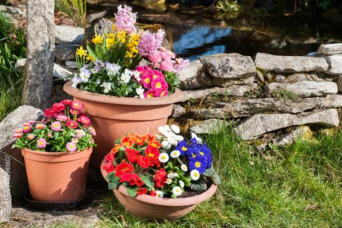 Fotobehang Pansies Frühlingsblumen