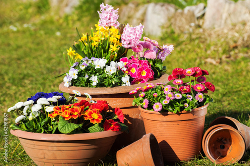 Poster Pansies Frühlingsblumen