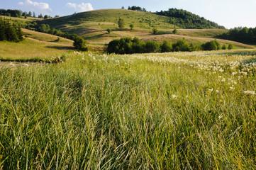 Rural Landscape In Serbia