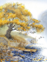 Watercolor landscape. An old tree near the pond