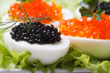eggs with black and red fish caviar and lettuce macro