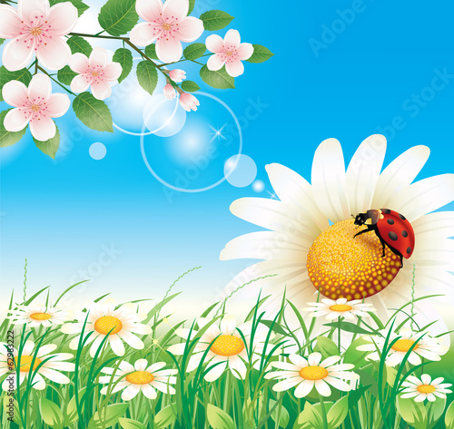 Flowery meadow with daisies on blue sky background