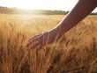 Leinwandbild Motiv Hand slide threw the wheat field