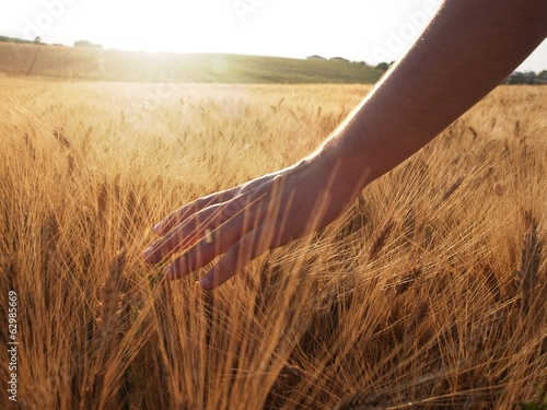 Hand slide threw the wheat field