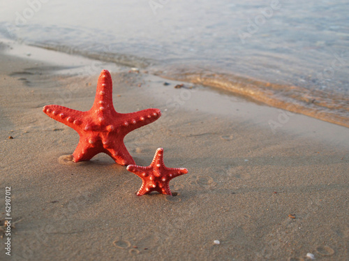Starfish on tropical beach