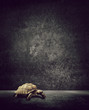 tortoise background