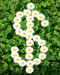 Dollar sign with daisies