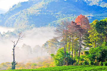 View of Morning Mist at doi angkhang Mountain, Chiang Mai, Thail
