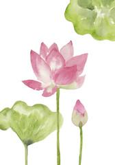 ピンク色のハスとつぼみ