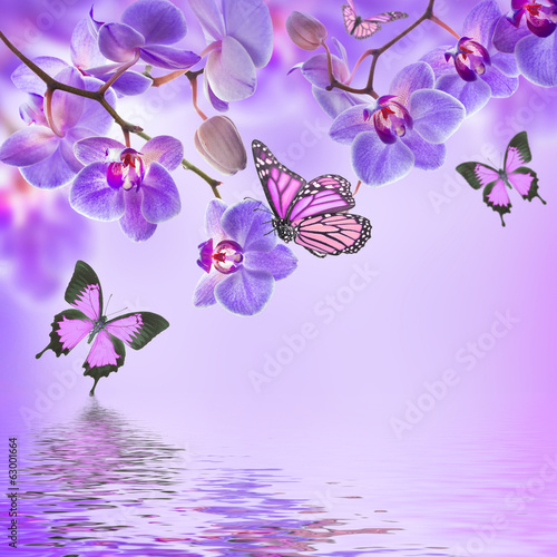 Fotobehang Orchidee Floral background of tropical orchids and butterfly