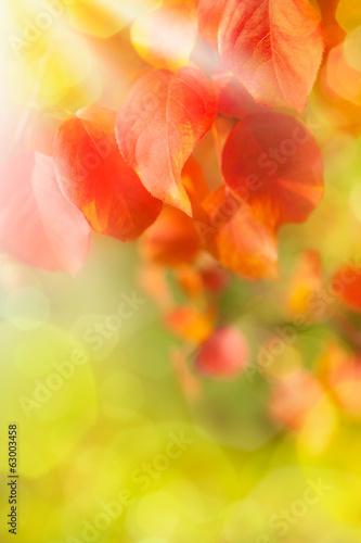 Red leaves in sunny autumn day