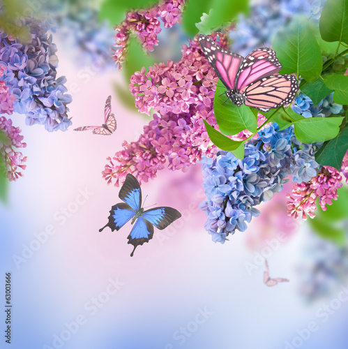 Foto op Canvas Lilac Branch of lilac blue and pink butterfly
