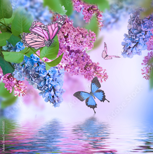 Foto op Plexiglas Lilac Branch of lilac blue and pink butterfly and water
