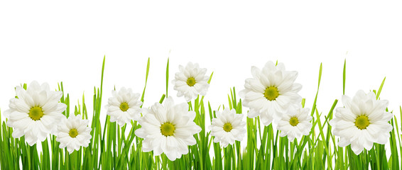 Grass and daisy flower edge
