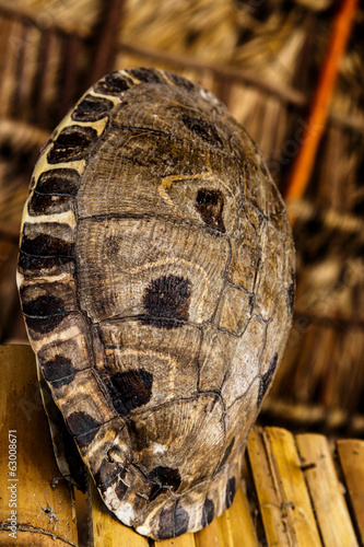 photography of turtle shell used in decoration