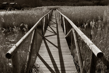 wooden boardwalk over swamp