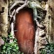 Alte Tür umrahmt vun Wurzeln