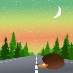 hedgehog on the road