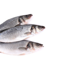 Three fresh fish.