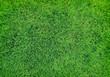 green grass - 63017077