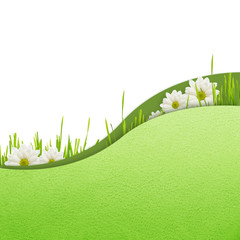 Background with grass and daisies
