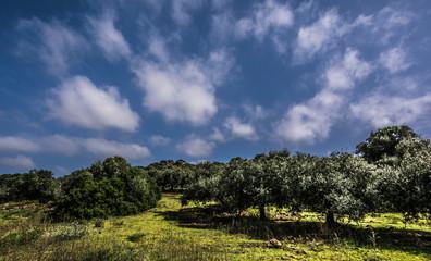 Nuraghe oltre gli olivi